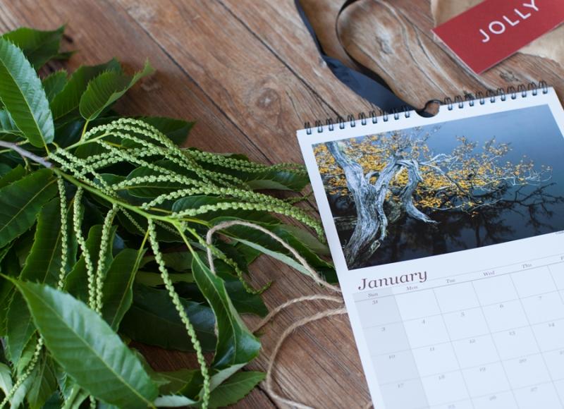 calendar-lib-02